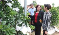 Huyện Mê Linh phấn đấu đạt chuẩn huyện nông thôn mới vào năm 2018