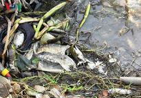 Tiếp diễn hiện tượng cá chết tại huyện Đầm Dơi, Cà Mau