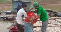 Kon Tum: Cá chết ở lòng hồ Plei Krông do thiếu ôxy