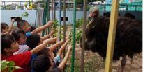 Ghi nhận tại trường mầm non tư thục 'Sao Biển' TP Hải Dương