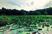 'Mục sở thị' rừng tràm đẹp nhất miền Tây Nam Bộ