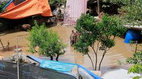 Hà Nội: Nước sông Hồng dâng cao nhấn chìm hoa màu, những ngôi nhà tạm