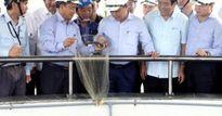 Thủ tướng kiểm tra việc đảm bảo môi trường tại Formosa Hà Tĩnh