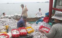 Thừa Thiên Huế: Tàu giã cào 'lộng hành' ven bờ biển, dân bức xúc