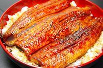 Giá lươn cao gấp 10 lần trong 8 năm, Nhật Bản thay thế bằng cá tra và cơ hội cho các DN xuất khẩu Việt Nam
