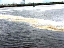 Góp ý báo cáo bảo vệ môi trường sông Thị Vải