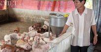 Giá lợn hôm nay 26.7: Đồng Nai còn 33.000 đ/kg, giá lợn giống tăng vùn vụt