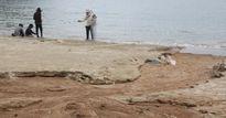 Đà Nẵng: Đào mương, xây kè chống sạt lở bán đảo Sơn Trà