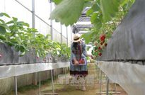 Gỡ 'nút thắt' vốn cho nông nghiệp công nghệ cao