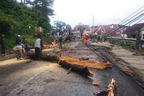 Bị cây thông khô đổ đè lên người, 2 mẹ con tử vong tại chỗ