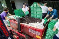 Thế giới ngày qua: Nhiều nước châu Âu bắt đầu thu hồi trứng gà nhiễm độc