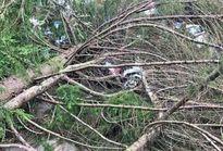 Cây xanh ngã đổ đè 2 mẹ con tử vong dưới trời mưa
