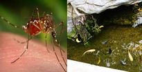 Tác nhân gây bệnh sốt xuất huyết và cách phòng chống