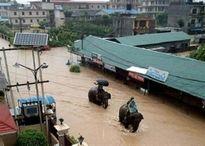 Voi giải cứu hàng trăm người mắc kẹt trong lũ ở Nepal