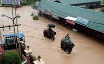 Voi cứu thoát hàng trăm du khách khỏi dòng nước lũ tại Nepal