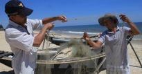Cá nóc nhiều bất thường tại vùng biển Thừa Thiên-Huế