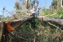 Bắt nhiều giám đốc, phó giám đốc công ty lâm nghiệp để mất rừng