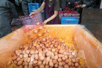 Hàn Quốc sẽ hoàn toàn kiểm soát bê bối trứng 'bẩn' vào cuối tuần này
