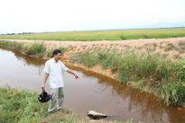 Quảng Trị: Địa phương kiến nghị đưa đường ống xả thải ra khỏi đồng ruộng