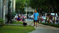 Nuôi chó gây ô uế nơi công cộng ở TP.HCM