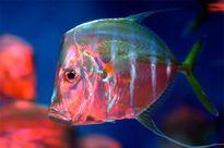 Những loài cá có khả năng tàng hình