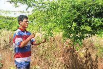 Yêu cầu công an vào cuộc điều tra vụ thương lái 'bỏ bom' nông dân