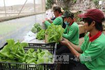 Đưa 'Bữa ăn an toàn' tới người dân Hà Nội