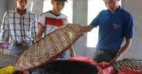 Những thanh niên miền biển Quảng Trị vượt qua 'Formosa', làm giàu