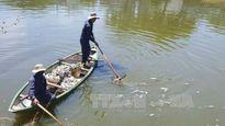 Nắng nóng kéo dài, cá chết trắng kênh Phú Lộc, Đà Nẵng