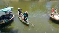 Đà Nẵng: Cá chết trắng trên sông Phú Lộc