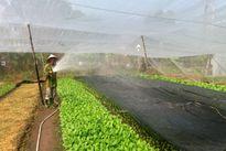 Sở Nông nghiệp là nơi cấp chứng nhận hữu cơ