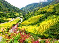 Những điểm đến quyến rũ nhất cho mùa thu Việt Nam