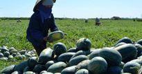 Điện Bàn: Trên 63 trang trại tổng hợp doanh thu hàng tỷ đồng/năm