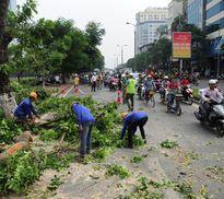 Hà Nội tiếp tục chặt, chuyển 130 cây xanh để làm đường sắt đô thị