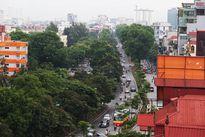 Hàng xà cừ cuối cùng ở Kim Mã trước ngày bị dịch chuyển