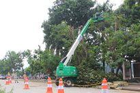 Dịch chuyển 95 cây xanh để thi công tuyến đường sắt đô thị