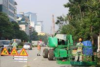 Cận cảnh hàng cây cổ thụ trên đường Kim Mã bị chặt hạ, đánh chuyển