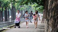 Hàng cây trên đường Kim Mã trước giờ chặt hạ, đánh chuyển