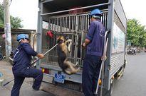 Thông tin về đội săn bắt chó giả mạo ở TPHCM là bịa đặt
