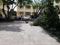 Nghệ An: Học sinh đã đến trường đầy đủ sau bão số 10