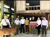 Tặng bò giống cho hộ nghèo ở Quế Phong