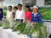 Hướng tới nông nghiệp hữu cơ bền vững