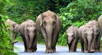 Tham quan vườn quốc gia Khao Yai – Thái Lan