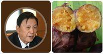 Khoai lang được giáo sư hàng đầu thế giới khẳng định là thực phẩm tốt nhất, ngừa ung thư hiệu quả cao