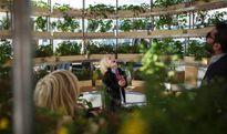 IKEA hướng dẫn cho người dân cách làm một khu vườn xanh trong phố
