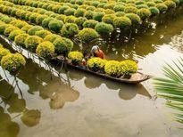 Sẵn sàng cho Hội nghị chuyển đổi mô hình phát triển bền vững tại đồng bằng sông Cửu Long
