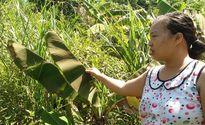 Thừa Thiên Huế: Nhà máy sản xuất viên nén gây ô nhiễm, dân bức xúc