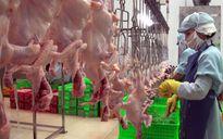 Xuất khẩu thịt gà vẫn còn nhiều rào cản
