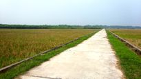 Đấu giá quyền sử dụng đất tại huyện Lâm Thao, Phú Thọ
