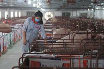 Chăn nuôi công nghệ cao là hướng đi tất yếu